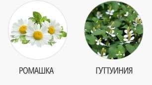 ромашка и гуттуиния