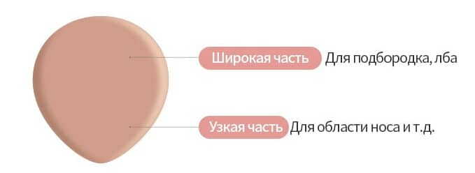 Спонж